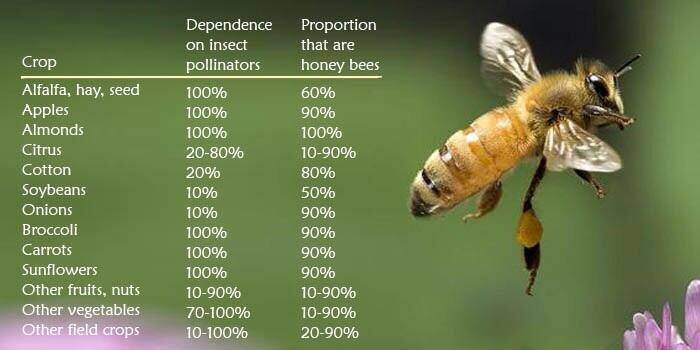 Bees are important for our food production